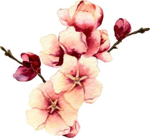 Olejek z róży  japońskiej